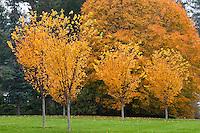 The Berkshires - Autumn