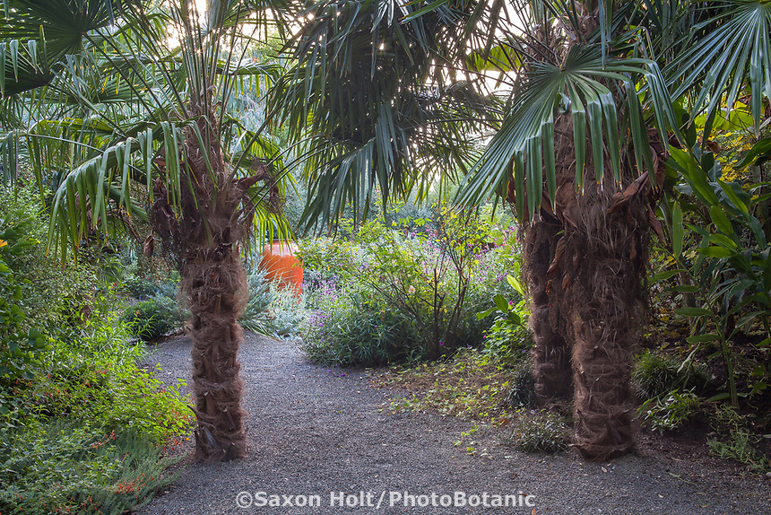 Trachycarpus fortunei, Chinese windmill palm trees flanking entry into backyard gravel garden room; Kuzma Garden. Photo MUST be credited as Design by Sean Hogan.