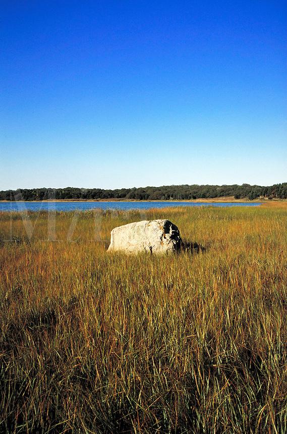 Marsh grass and boulder.
