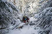 Hiking climbing over blow down on North Carter Trail in the White Mountains, New Hampshire during the winter months.