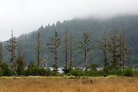 Fog covers the top of the hills to the north of Humboldt Lagoons State Park near Trinidad, California. Photographed 07/08