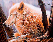Sandi, REALISTIC ANIMALS, REALISTISCHE TIERE, ANIMALES REALISTICOS, paintings+++++thedaystar,USSN71,#a#, EVERYDAY ,wolf,wolves ,wolf,wolves ,puzzles