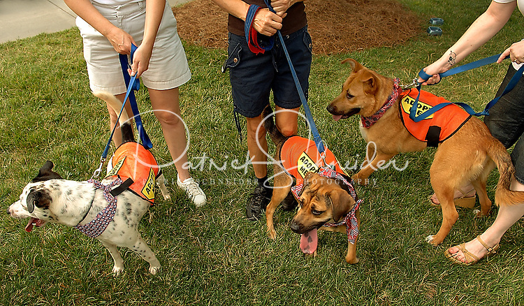 Dogs for adoption are introduced to potential owners during a community parade at Birkdale Village in Huntersville, NC