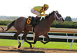 LEXINGTON, KY - OCTOBER 12: #6 Fact Finding and jockey John Velazquez win the 5th race, Allowance $62,000 for 2 year olds for owner Stonestreet Stable, Mrs. John Magnier, Michael Tabor, and Derrick Smith and trainer Todd Pletcher at Keeneland Race Course.  October 12, 2016, Lexington, Kentucky. (Photo by Candice Chavez/Eclipse Sportswire/Getty Images)