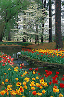 Tulips and flowering dogwood<br /> Main Garden<br /> Hodges Gardens State Park<br /> Florien, Louisiana