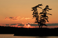 """Twin Pine Sunset""<br />
