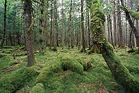 Haida Gwaii (Queen Charlotte Islands), Northern BC, British Columbia, Canada - Temperate Rainforest on Graham Island