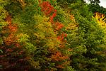 Autumn Colors 10--20-19-380