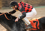 09 October 24: Sarto is ridden to victory in the Find Handicap by Joseph Rocco Jr. on Frank J. DeFrancis Memorial Dash Stakes Day at Laurel Park in Laurel, Maryland.