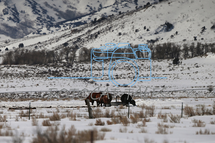 Images from Ruby Valley, Nev., on Monday, March 18, 2019. <br /> Photo by Cathleen Allison/Nevada Momentum