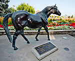 TORONTO, ON - SEPTEMBER 16: Scenes from the track on Ricoh Woodbine Mile Day at Woodbine Racetrack on September 16, 2017 in Toronto, Ontario. (Photo by Scott Serio/Eclipse Sportswire/Getty Images)