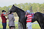 February 6, 2021: #11 LUCKY LAW (IRE) and Jockey Robby Albarado run in the Sam F Davis for Trainer Patrick Biancone at Tampa Bay Downs in Oldsmar, Florida on February 6, 2021. Delikat/Eclipse Sportswire/CSM