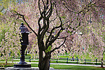 Cherry blossoms and a Japanese lantern in Boston Public Garden, Back Bay, Boston, MA, USA