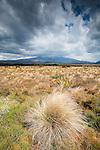 Mt Ruapehu, New Zealand