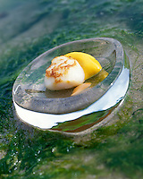 "Europe/France/Bretagne/22/Cotes d'Armor/Côtes d'Armor/Sables-d'Or-les-Pins :  Coquilles Saint-Jacques roties ,patates douces jus réduit de crustacé, Recette de Michel Hellio chef des restaurants ""La Voile d'Or"" et ""La Lagune"""