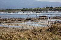 stagno di Cabras (Sardegna)