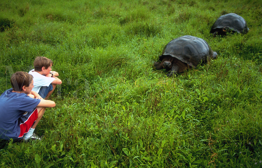 Kids watching giant tortoise in the wild, Galapagos Islands, Ecuador