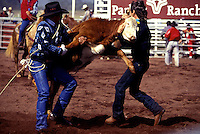 Two men struggle to rope a young calf on the grounds at the Parker Ranch rodeo, near Waimea on the Big Island.