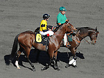 October 9, 2010.Tropic Storm riden by Russell Baze in the post parade for The Oak Tree Mile at Hollywood Park, Inglewood, CA._Cynthia Lum/Eclipse Sportswire.com