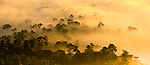Mist and low cloud hanging over lowland rainforest just after sunrise in the heart of Danum Valley, Sabah, Borneo.