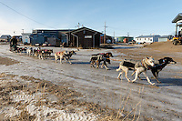 Sonny Lindner moves his dog team along a snow-free road in Golovin on Monday, March 10, during the Iditarod Sled Dog Race 2014. <br /> <br /> PHOTO (c) BY JEFF SCHULTZ/IditarodPhotos.com -- REPRODUCTION PROHIBITED WITHOUT PERMISSION