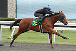 April 03, 2014: Hip 78 Corinthian - Beckoning consigned by Equinox Inc worked 1/8 in 10:1.  Candice Chavez/ESW/CSM