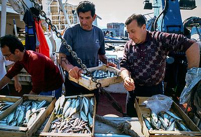 Italien, Toskana, Insel Elba, Portoferraio: Fischer verkaufen ihren Fang direkt nach Ankunft im Hafen | Italy, Tuscany, island Elba, Portoferraio: fishermen selling their catch directly after return