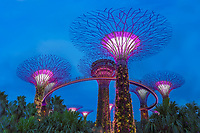 Singapore's Garden by the Bay is a sensory overload experience, full of surprising art, colorful lase show each evening and modern architecture.  These illuminated mushroom towers are part of the evening laser light show set to music.