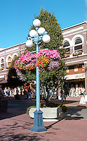 "Victoria: Hanging Basket, Corner of Humboldt & Government. ""Cluster Lamp"" Posts. Began only in 1937.   Photo '88."