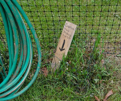 "sign ""caution tiny birds nest"", Yarmouth Community Garden, Maine, USA"