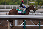 MAY 1,2015: Able Friend,trained by John Moore,prepares for the Champions Mile at Sha Tin in New Territories,Hong Kong. Kazushi Ishida/ESW/CSM