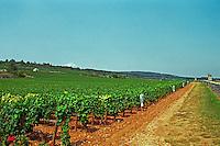 The le Montrachet vineyard in Chassagne and Puligny Montrachet, Bourgogne