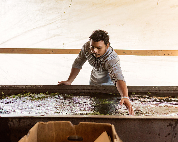 December 30, 2016. Rose Hill, North Carolina.<br /> <br /> John Dunn helps wash produce at Cottles Organics, a farm where he has worked since he was a child.<br />  <br /> John Dunn, age 19, is currently a freshman at NC State University and is the first person in his family to go to college. With a combination of grants, loans, help from his grandfather and weekend farm work, Dunn hopes to find finish college and find a career in agriculture.<br /> <br />  Colleges and universities, which are always trying to pinpoint an under-served and sometimes underprivileged populations of students, have noted a decline in students from rural areas of the country. There are various efforts underway in colleges and universities to identify more of these kids and get them enrolled.