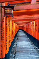 a lantern along the miles and miles of walkways in the Fushimi Inari Shrine in Koyoto.