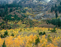 749450011 brilliant yellow fall colored aspens populous tremuloides grace the base of lupine meadows while snow and a clearing storm cover the hillsides and mountains surrounding the meadow in grand tetons national park wyoming
