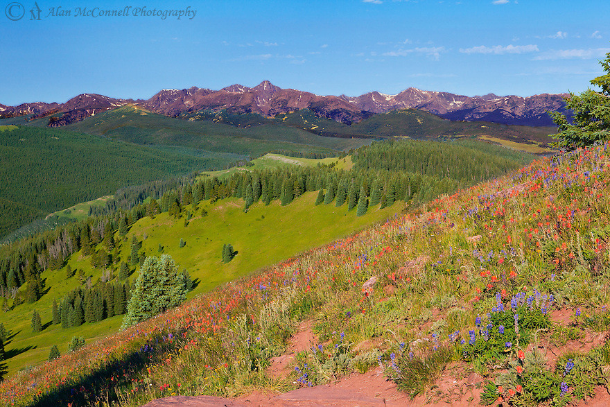 After hiking this trail several times, I knew I wanted to arrive at this point early in the morning to get the warm rays of the morning sun on the multitude of sub-alpine flowers in the forground and Mount of the Holy Cross is the background.  Arriving at the 11,000' trailhead before sunrise, I was able to hike the 2 miles in time for the best light of the day.  For a while I had the entire mountain to myself.  On the decent, I was able to stop and have several good conversations with other nature lovers making their way up the trail.