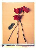 Roses, transfer<br />