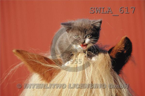 Carl, ANIMALS, photos(SWLA617,#A#) Katzen, gatos