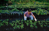 Nursery workers inspect plants for eggs which might hatch and spread the migration of the Cogui frog. War is waged on the Coqui frog because its numbers are exploding--and it has no predators.<br />  <br /> The Coqui--much revered in its native Puerto Rico--was first imported on plant material. The Coqui is as large as a quarter and has a chirpy little call that is the decibel level of a lawnmower.