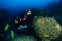 Scuba diver exploring the underwater landscape, Carloforte, San Pietro Island, Sardinia, Italy, Tyrrhenian Sea, Mediterranean
