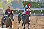 13 February 2010:  Warbling in the Hurricane Bertie Stakes at Gulfstream Park in Hallandale Beach, FL.
