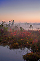 Pinelands marsh, Pinebarrens, New Jersey