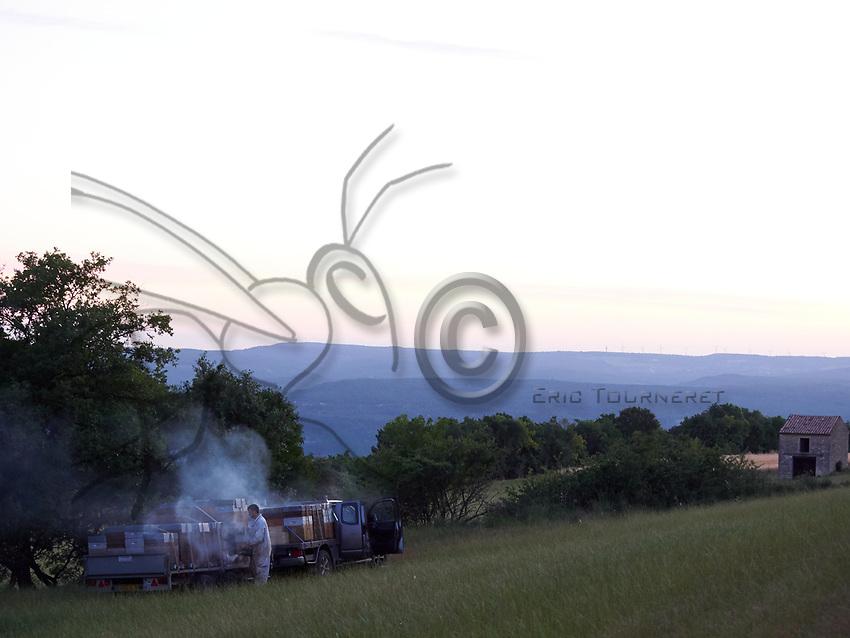 In the early morning, a beekeeper prepare his hives for unloading and sets them up near a lavender field in the Drôme.<br /> Au petit matin, un apiculteur prépare ses ruches pour les décharger et les installer près des champs de lavande dans la Drôme.