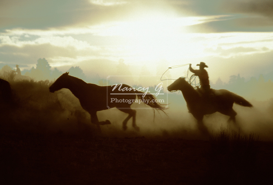 Cowboy chasing horses at sunset in Oregon
