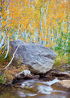 South fork Bishop Crekk with fall colored aspens. Inyo National Forest. Eastern Sierras. California