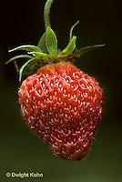 ST04-001b  Strawberry - Scott variety