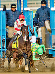 January 2 2016: Donegal Moon unseats rider Manuel Franco as Flexibility with Irad Ortiz Jr. goes on to win the 146th running of the Grade III Jerome Stakes for 3-year olds, going 1 mile & 70 yards at Aqueduct Racetrak.  Trainer Chad C. Brown. Owner Klaravich Stables & William H. Lawrence. Sue Kawczynski/ESW/CSM