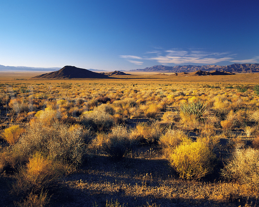 Mohave Desert near Barstow in low evening light, with the desert-floor covereed in bush and scrub; with distant low hills; California, US