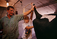 "Preparing for the Nobles County 4-H Dairy Show, Anna Vander Kooi grooms a heifer in her family's Minnesota barn. ""Showing animals gives good publicity to the dairy industry,"" says the 4-H veteran. Anna entered three animals in the competition and brought home three ribbons."