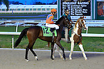 January 16, 2016: Mending Fences with Richard E Eramia up in the Lecomte Stakes in New Orleans Louisiana. Steve Dalmado/ESW/CSM